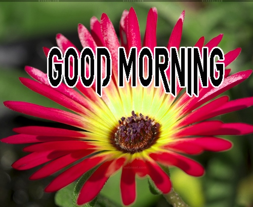 Good Morning Images 1080p Download 2