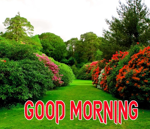 Good Morning Images 1080p Download 20