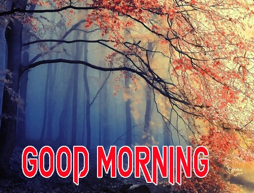 Good Morning Images 1080p Download 21