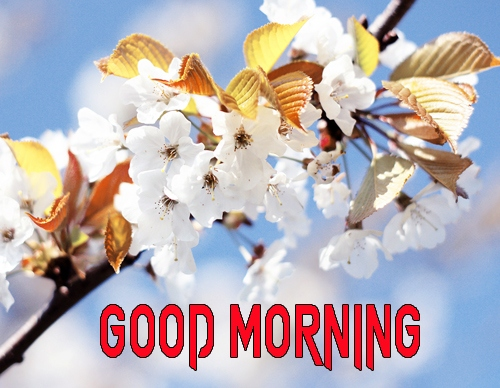 Good Morning Images 1080p Download 23