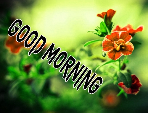 Good Morning Images 1080p Download 24