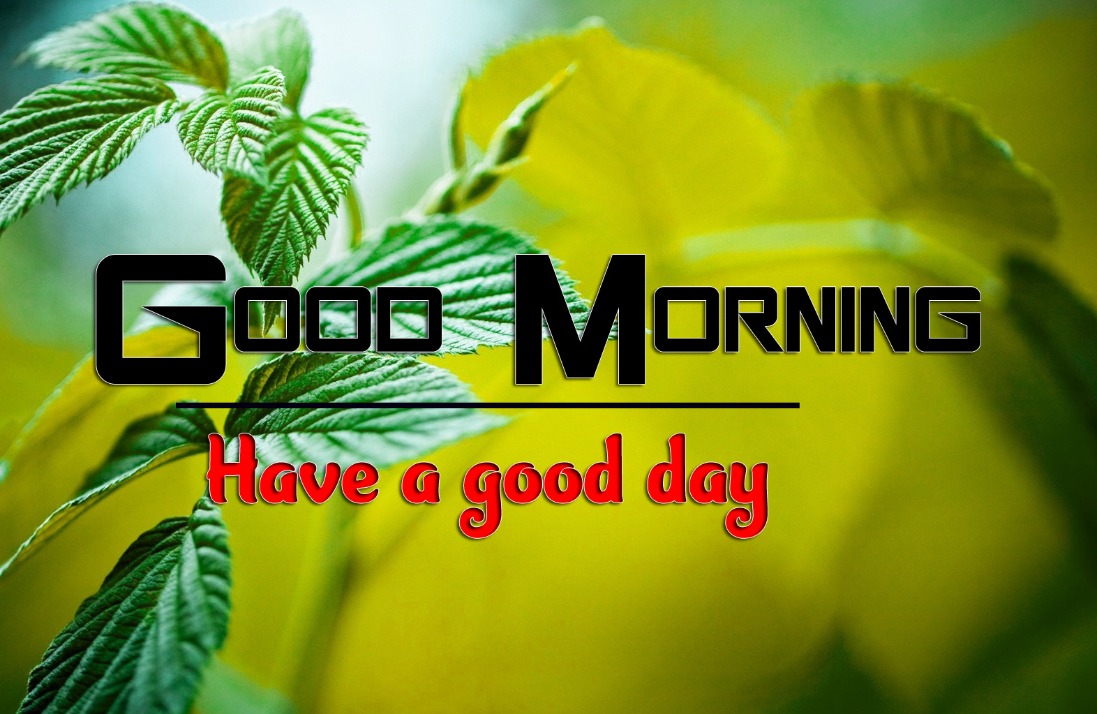 Good Morning Images 1080p Download 3 1