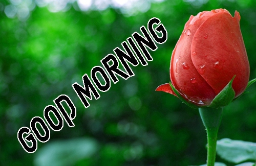 Good Morning Images 1080p Download 5