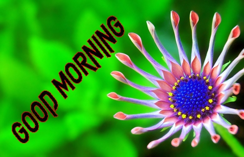 Good Morning Images 1080p Download 6