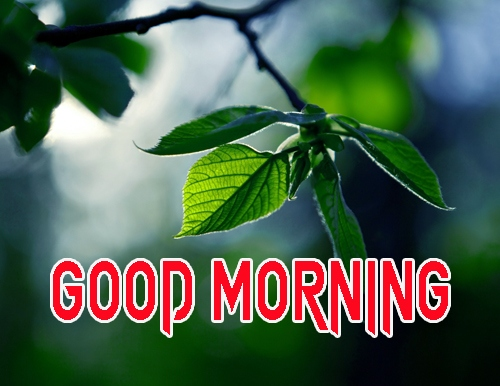 Good Morning Images 1080p Download 7