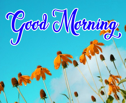 High Quality Good Morning Pics Download 15