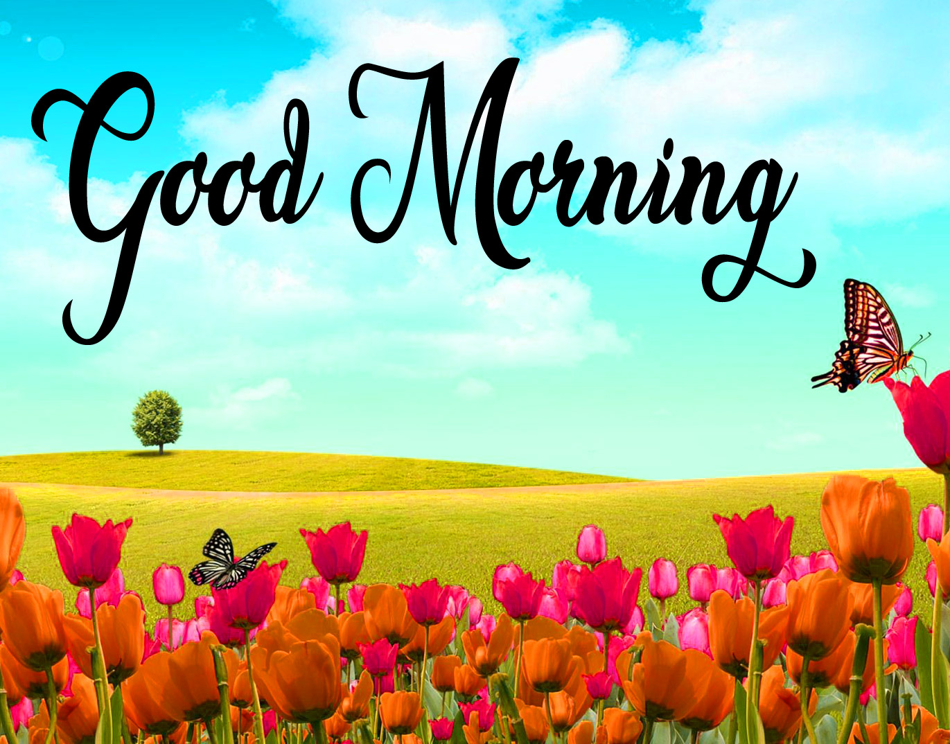 High Quality Good Morning Pics Download 19