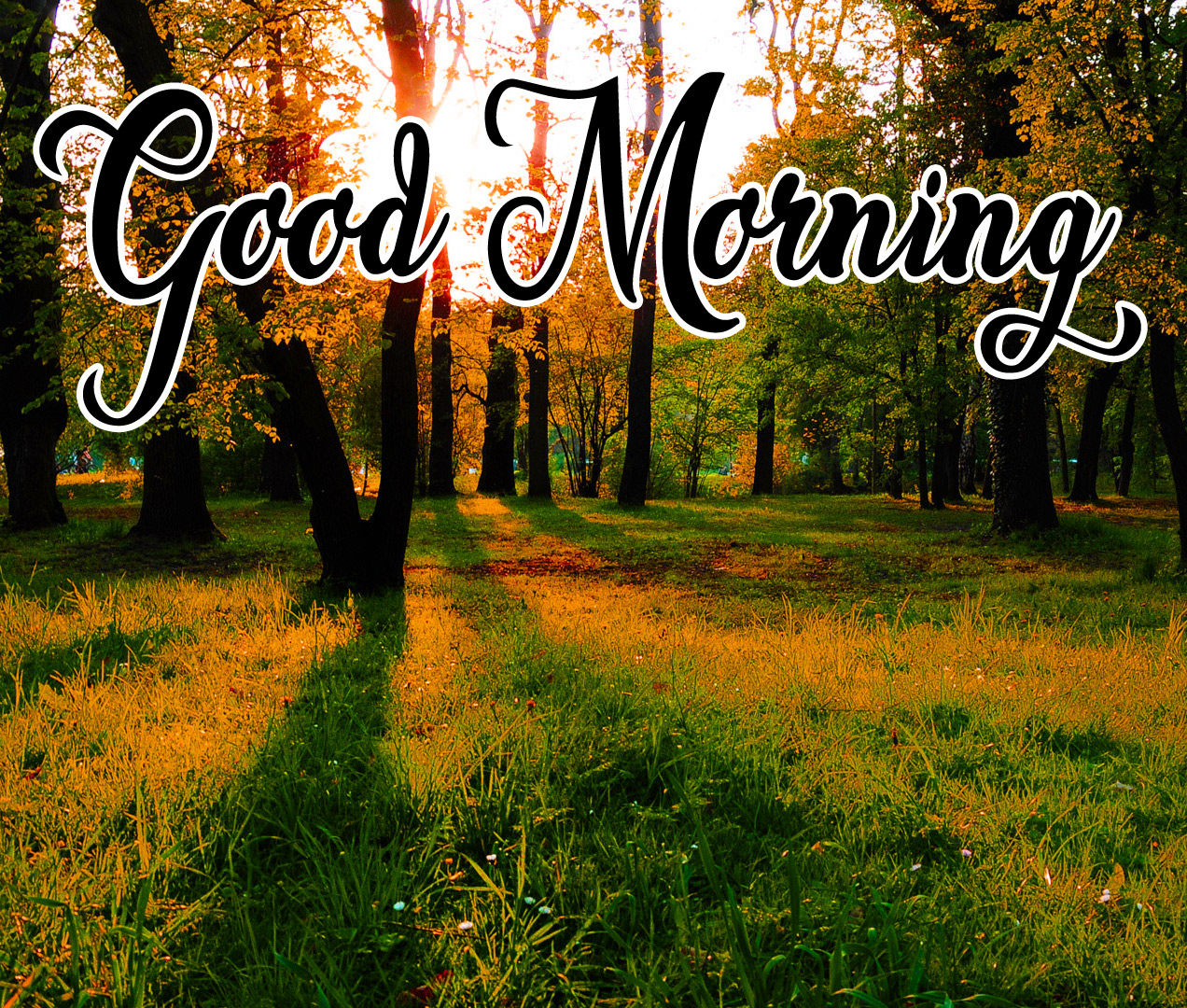 High Quality Good Morning Pics Download 3