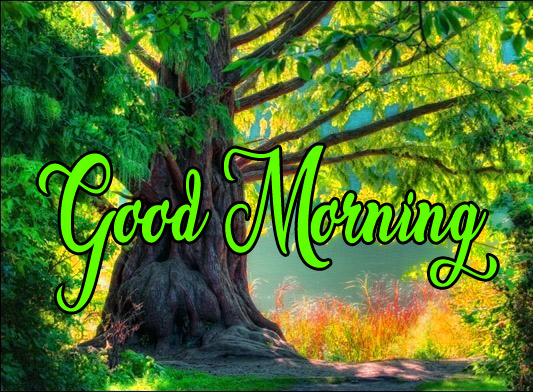 High Quality Good Morning Pics Download 5