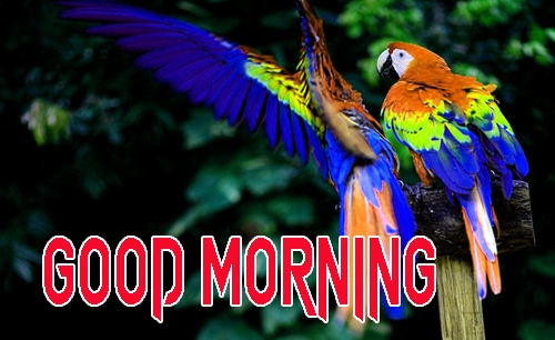 Latest Good Morning Images Pictures Free Download