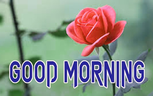 Latest Good Morning Images Pics Download