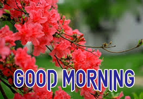 Free Latest Good Morning Images Pictures Download
