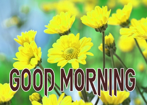 Free Latest Good Morning Images Wallpaper Download