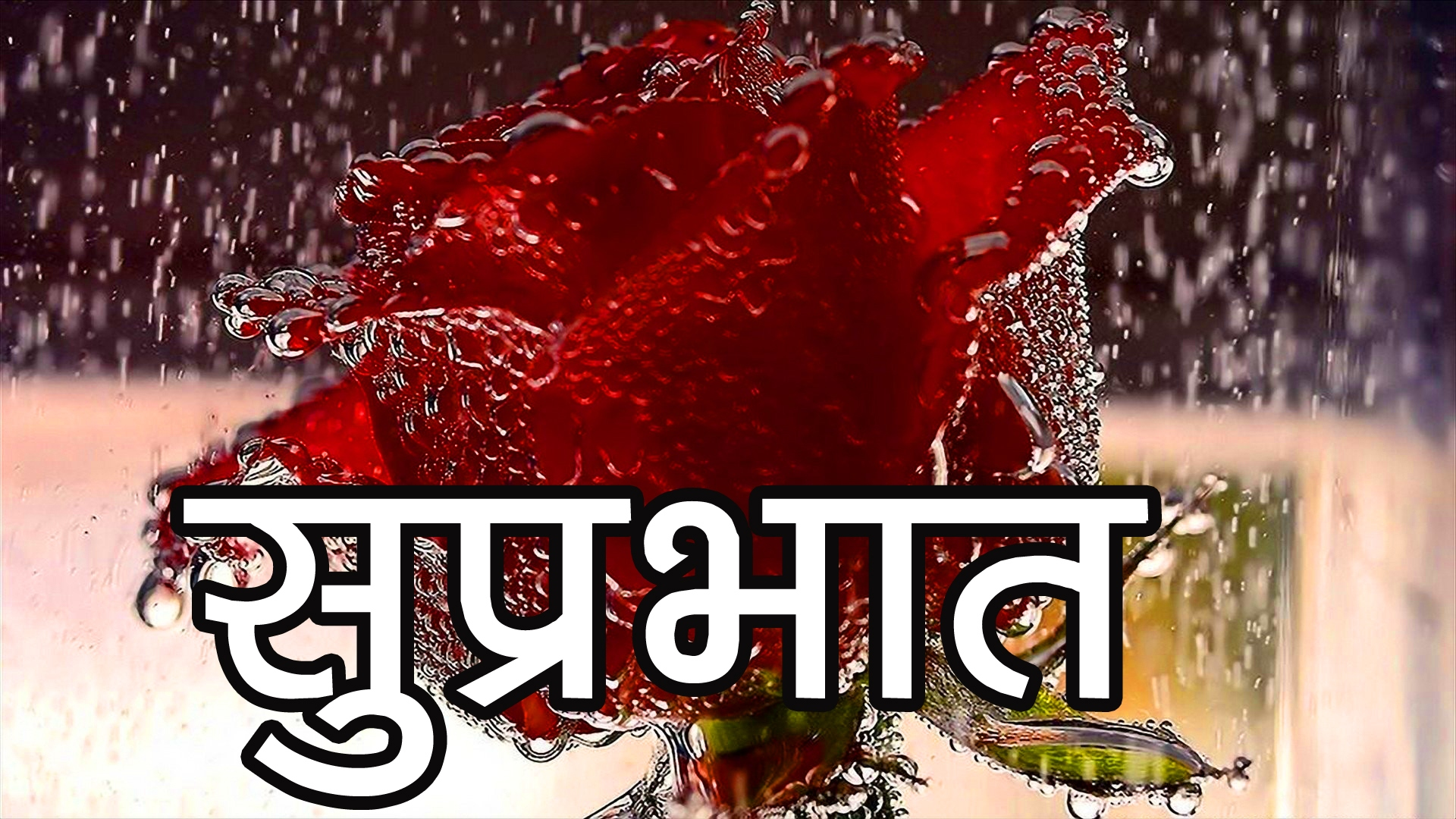 Red Rose Suprabhat Images 1 1