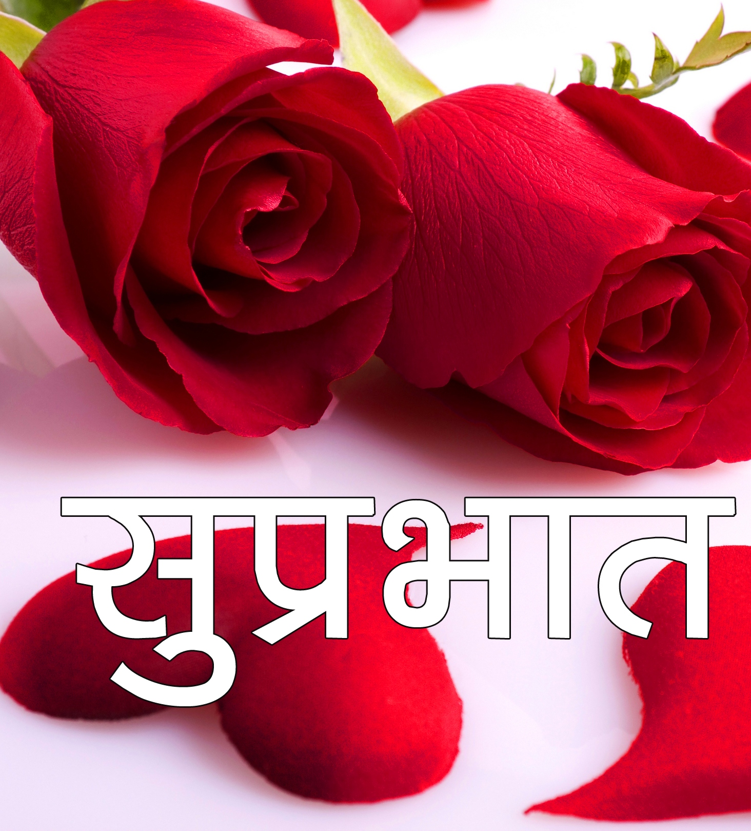 Red Rose Suprabhat Images 1