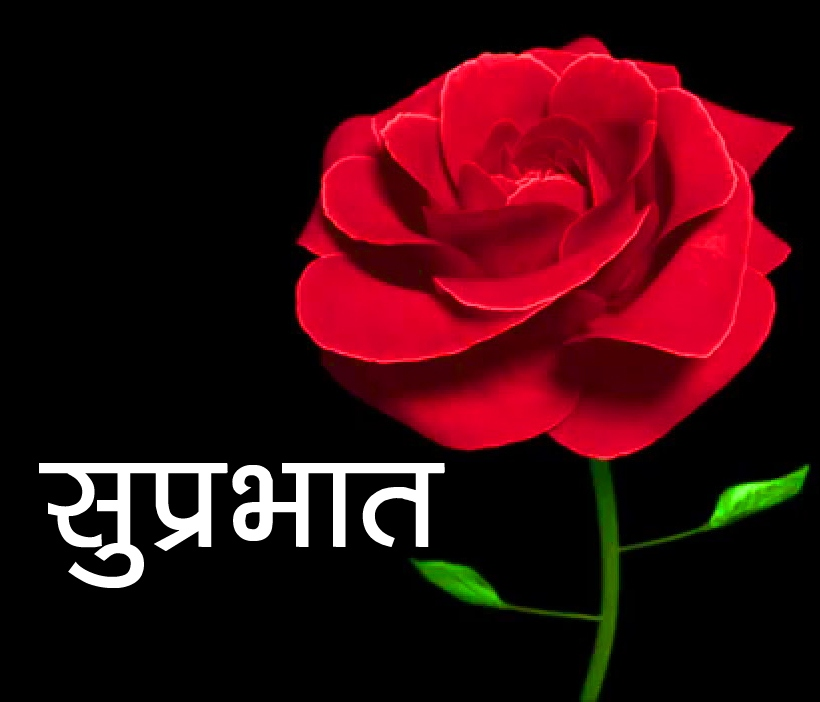 Red Rose Suprabhat Images 10 1