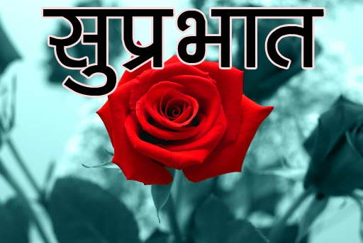 Red Rose Suprabhat Images 11