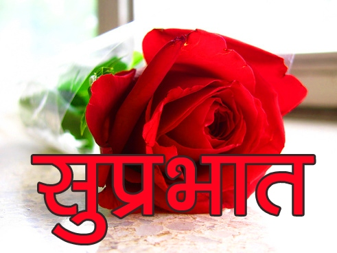 Red Rose Suprabhat Images 13 1