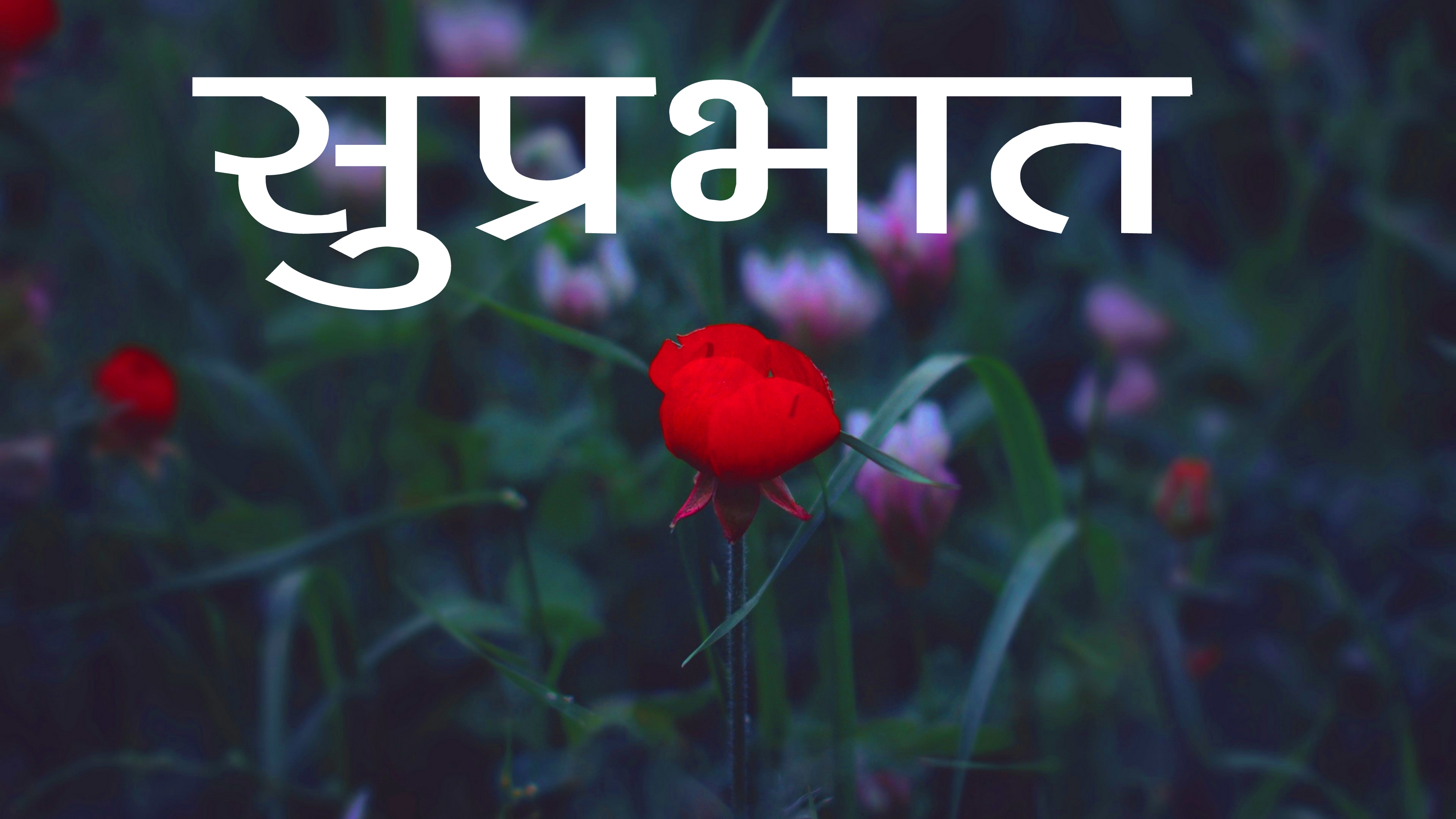 Red Rose Suprabhat Images 14 1