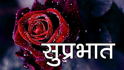 Red Rose Suprabhat Images 16