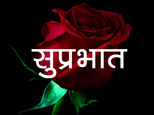 Red Rose Suprabhat Images 17