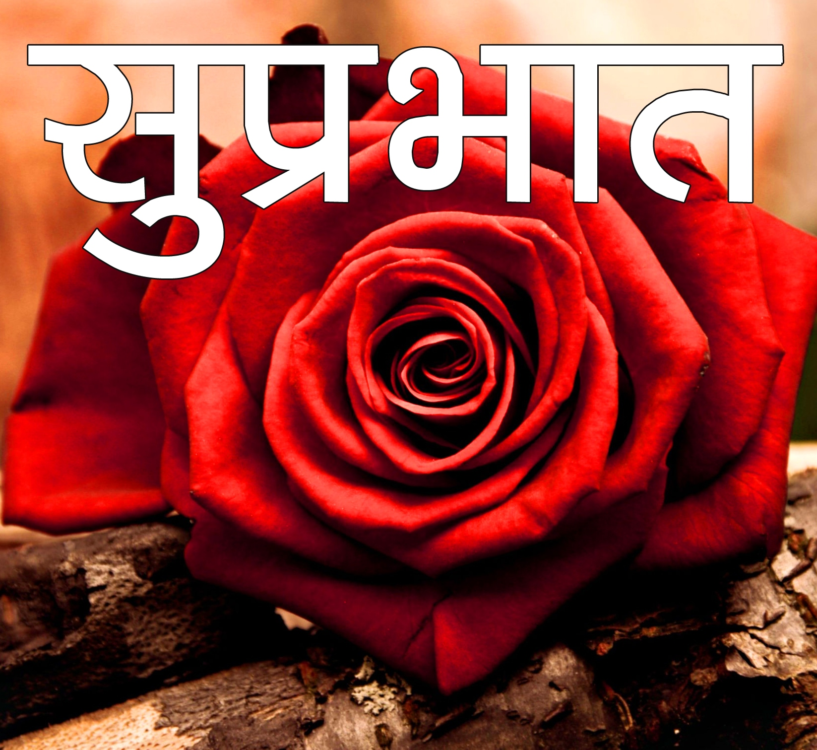 Red Rose Suprabhat Images 18 1