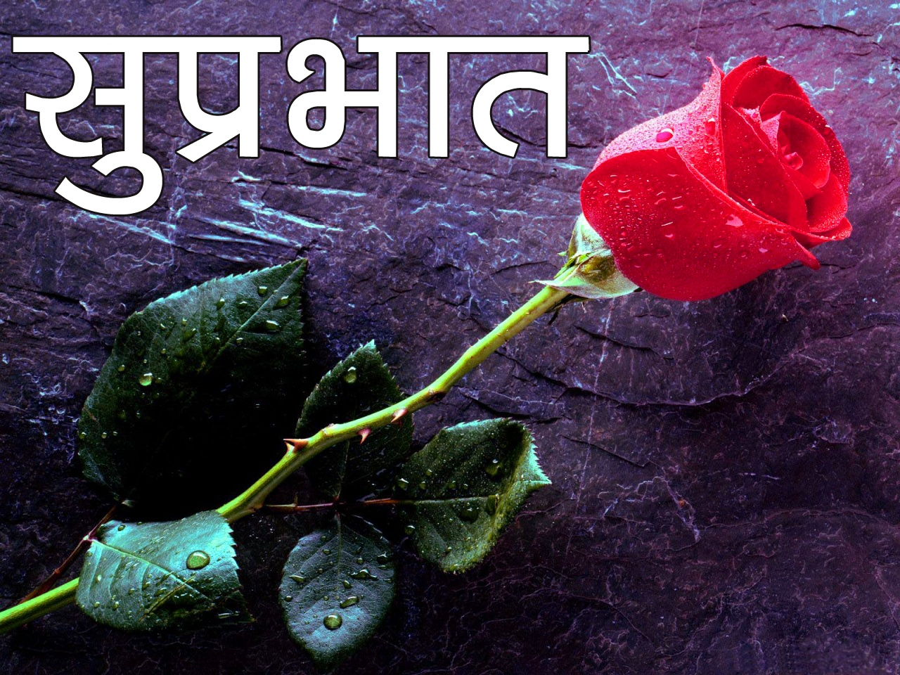 Red Rose Suprabhat Images 19