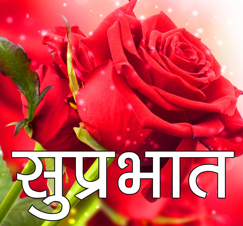 Red Rose Suprabhat Images 21