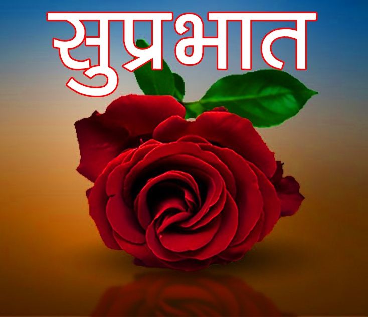 Red Rose Suprabhat Images 22