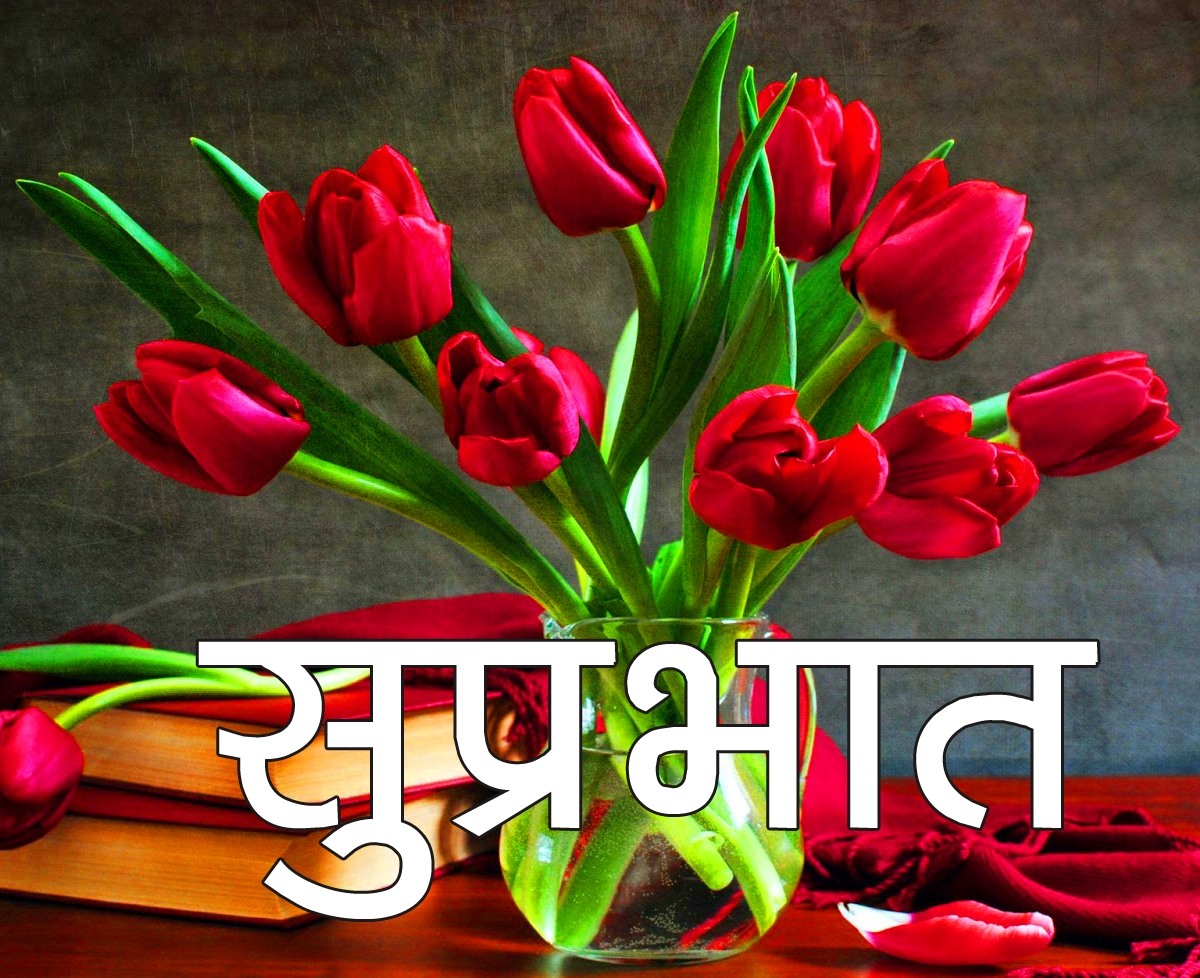 Red Rose Suprabhat Images 4
