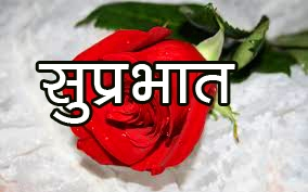 Red Rose Suprabhat Images 6 1