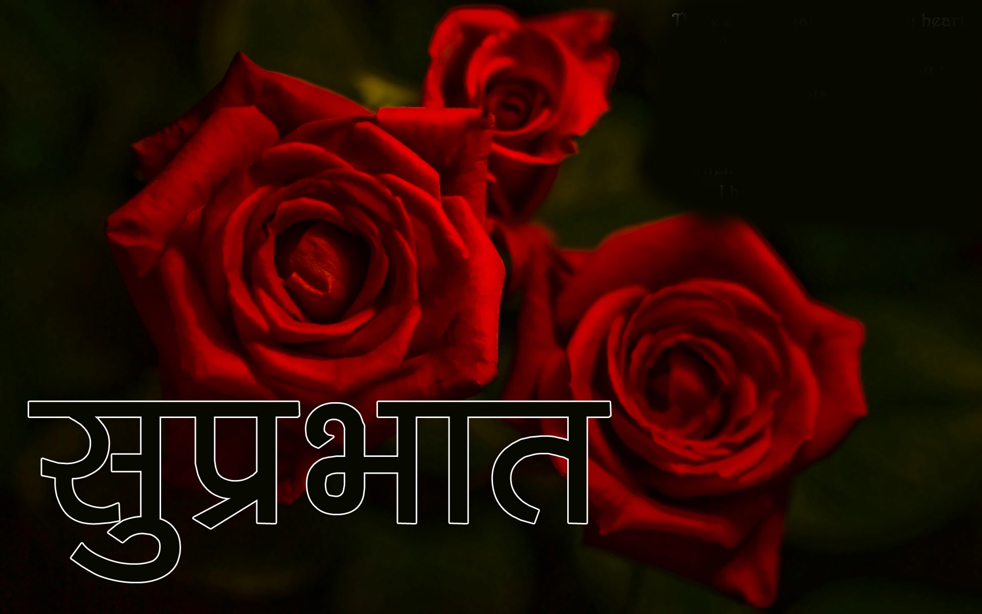 Red Rose Suprabhat Images 6