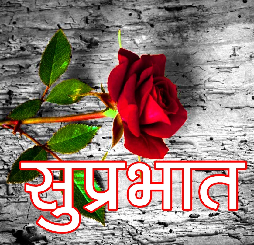 Red Rose Suprabhat Images 7