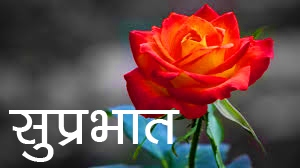 Red Rose Suprabhat Images 8 1