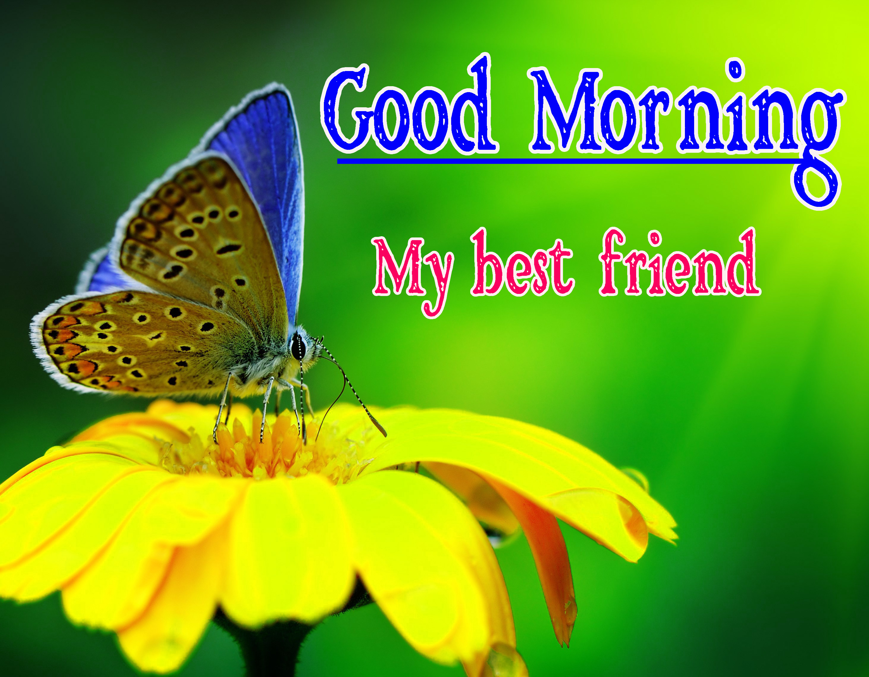 Best Friend Good Morning Images 35