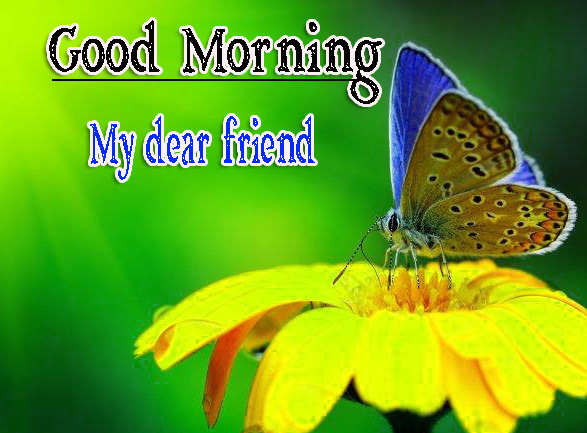 Best Friend Good Morning Images 42