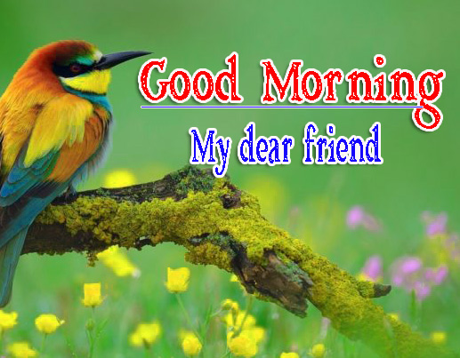 Best Friend Good Morning Images 47