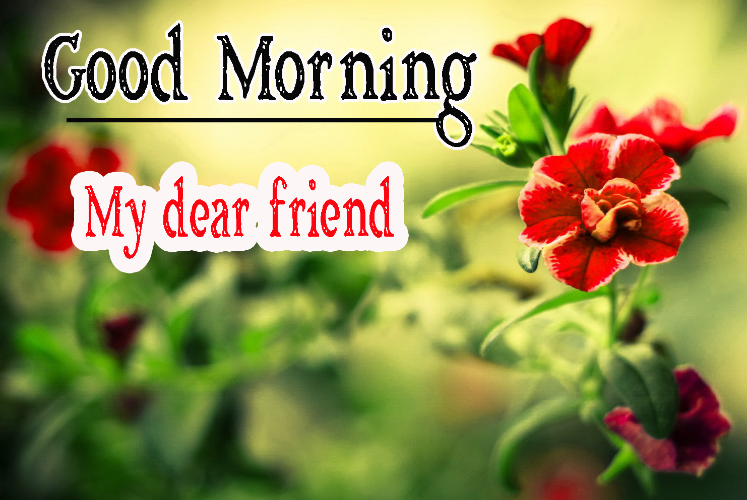 Best Friend Good Morning Images 49
