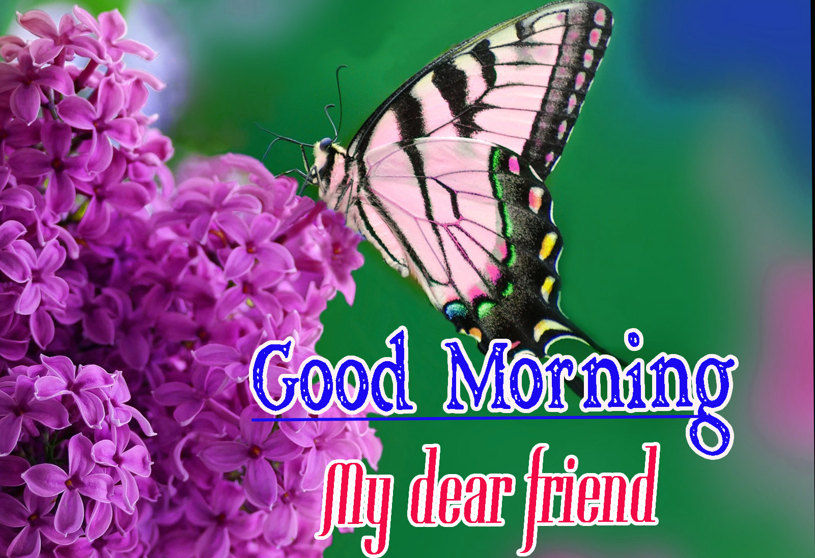 Best Friend Good Morning Images 68
