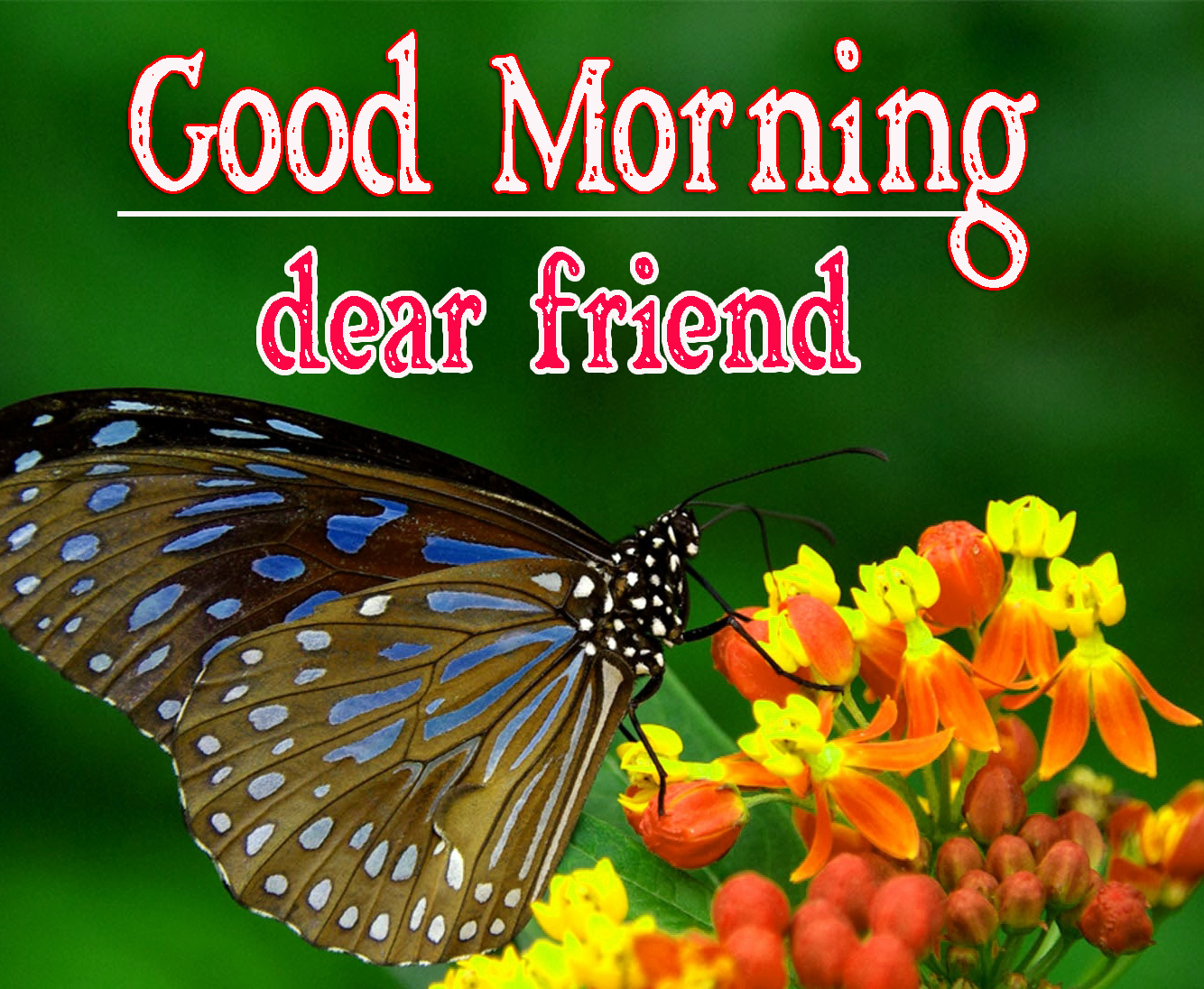 Best Friend Good Morning Images 80