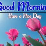 Flower Good morning Images 100