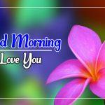 Flower Good morning Images 33