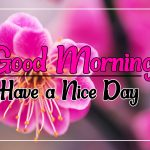 Flower Good morning Images 34