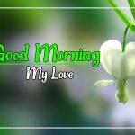 Flower Good morning Images 37