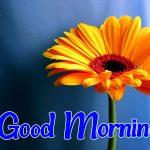 Flower Good morning Images 48