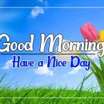Flower Good morning Images 71