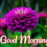 Flower Good morning Images 73