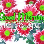 Flower Good morning Images 78