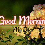 Flower Good morning Images 86
