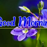 Flower Good morning Images 92